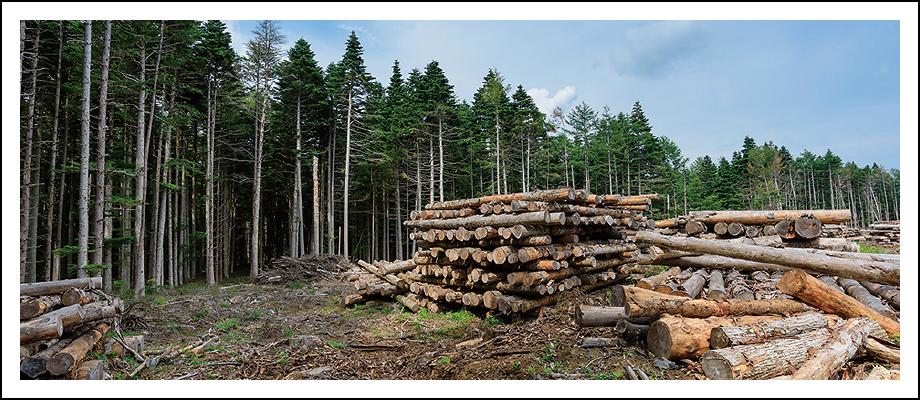 ぐんまで働く【林業で働く】